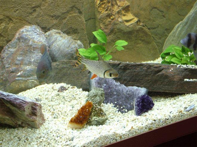 цеолит для аквариума