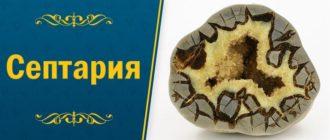 камень септария