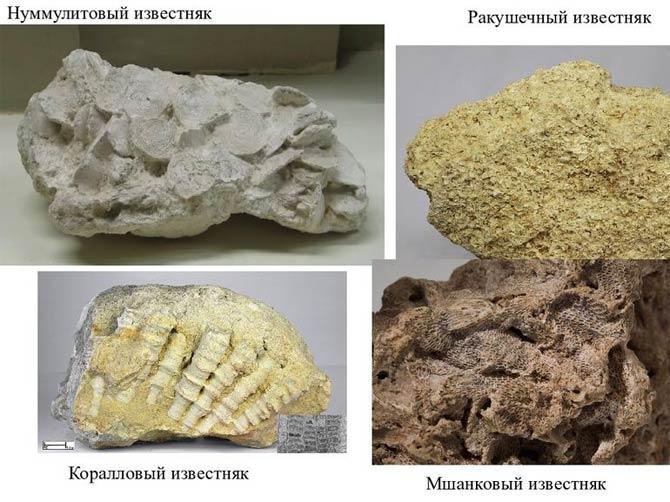 Осадочные горные породы примеры